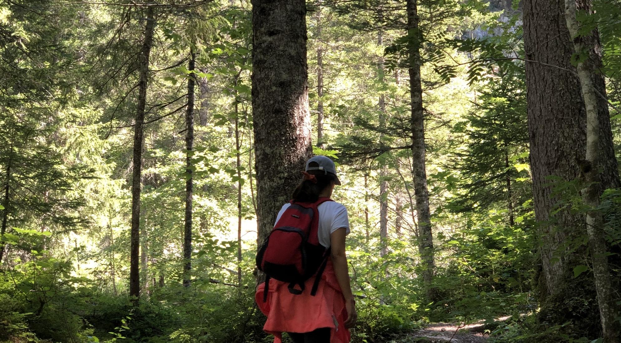 Baños de bosque sierra de madrid